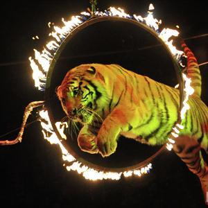 Цирки Балахны